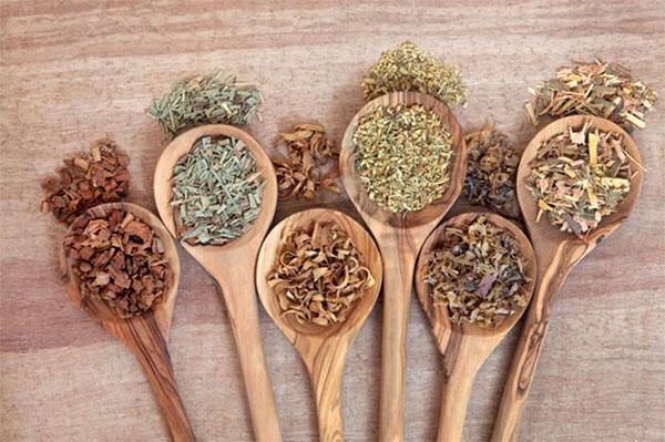 Оздоровительные свойства коры ивы