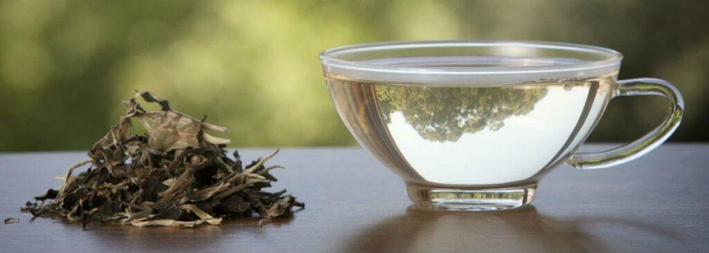 6 ценных свойств белого чая
