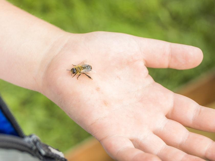 Укусы насекомых у детей — что делать и как помочь